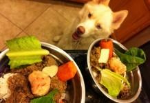 chó husky ăn gì? cách chọn thức ăn cho chó husky