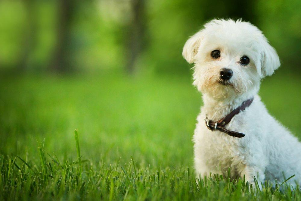 những chú chó đáng yêu nhất thế giới   những chú chó dễ thương nhất thế giới