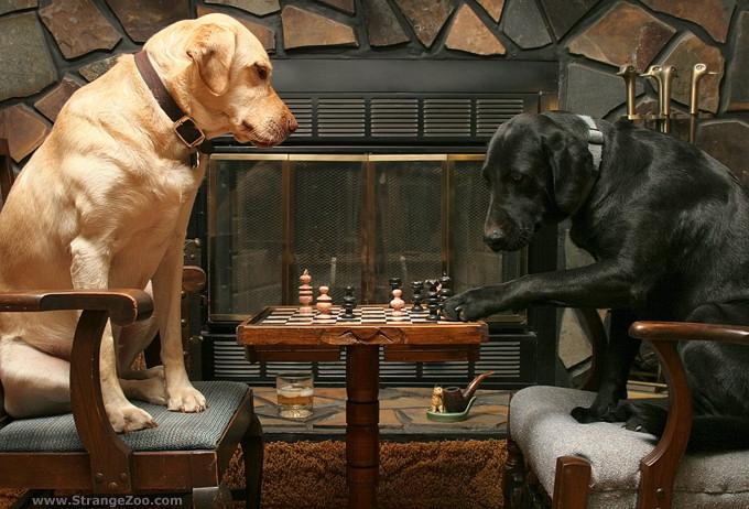 các giống chó thông minh nhất trên thế giới