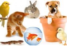 Vật nuôi thú cưng phổ biến. Nuôi thú cưng và các lưu ý khi nuôi