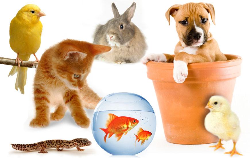 Vật nuôi thú cưng phổ biến. Các lưu ý khi nuôi thú cưng