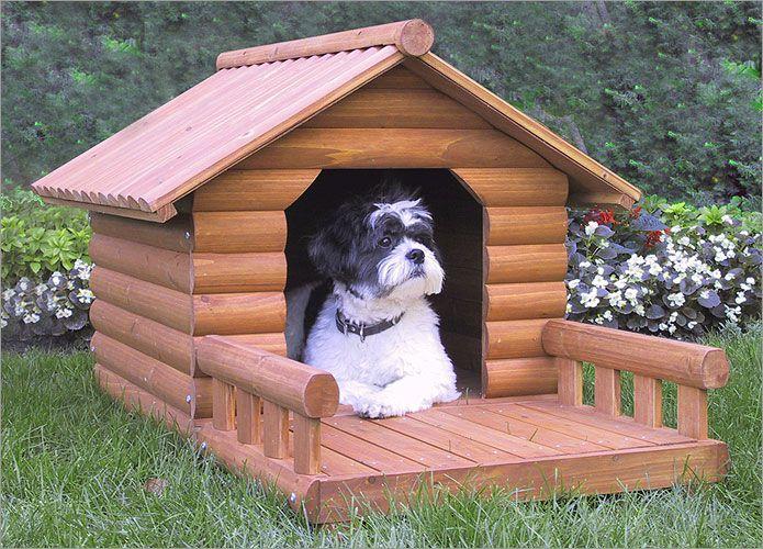giá các loại đồ dùng cho chó poodle