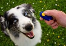 huấn luyện chó đúng cách