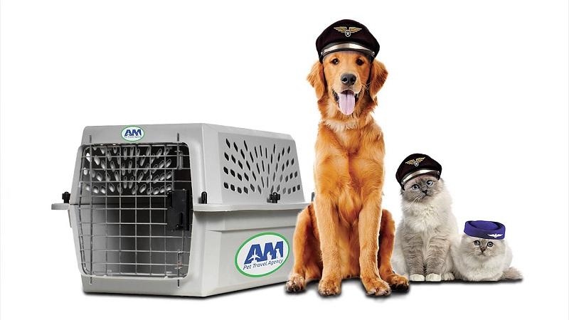 dịch vụ vận chuyển thú cưng