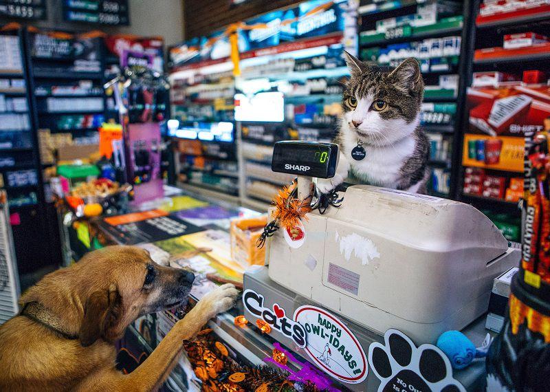 Các cửa hàng phụ kiện thú cưng, shop thú cưng ở Hà Nội và TPHCM