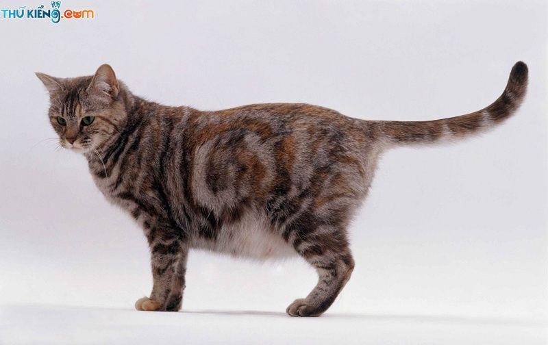 Dấu hiệu nhận biết mèo có thai. Mèo mang thai trong mấy tháng thì đẻ?