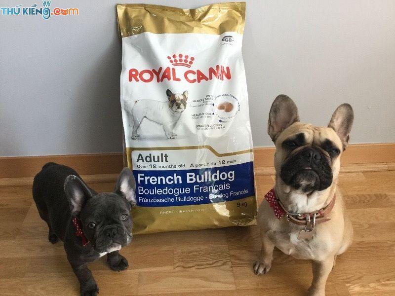 Chó Bull Pháp ăn gì? Thực đơn cho Bull Pháp. Thức ăn cho Bull Pháp