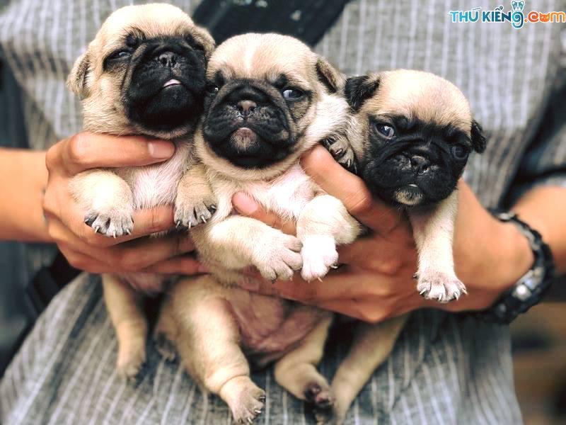 Nuôi chó làm giàu. Mô hình làm giàu từ chăn nuôi chó. Vật nuôi làm giàu