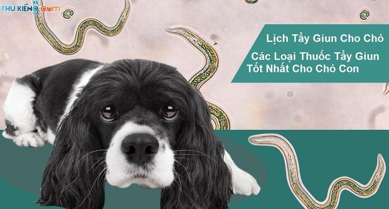 Lịch tẩy giun cho chó. Giá bán các loại thuốc tẩy giun cho chó tốt nhất