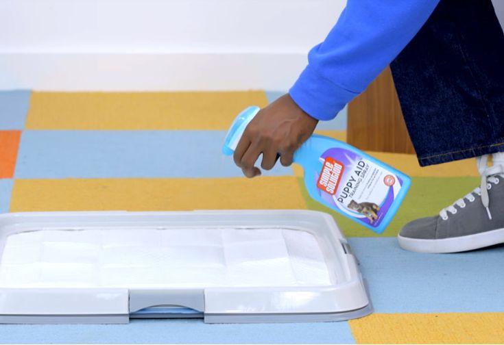 Nước xịt hướng dẫn chó đi vệ sinh đúng chỗ là gì? Cách sử dụng nước xịt