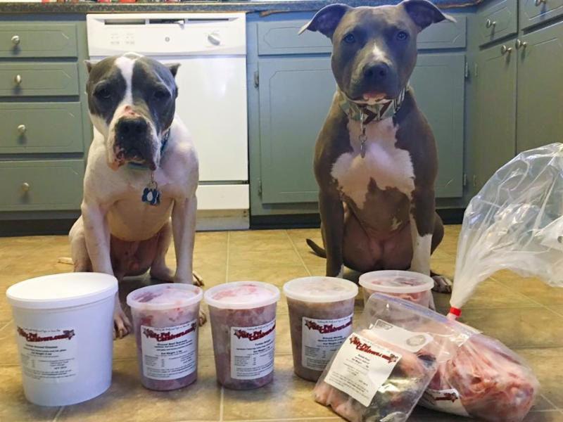 Chó Pitbull Ăn Gì? Thức Ăn Cho Chó Pitbull Con và Trưởng Thành