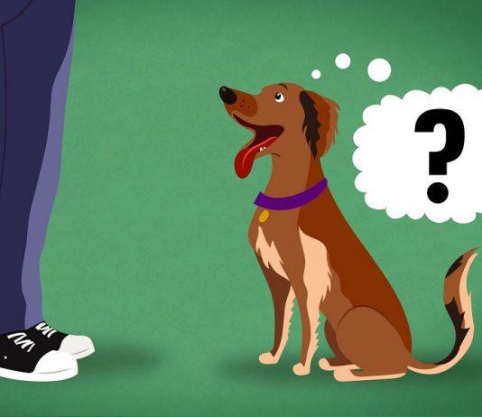 Làm sao để chọn được chó khôn? Các dấu hiệu để nhận biết chó khôn