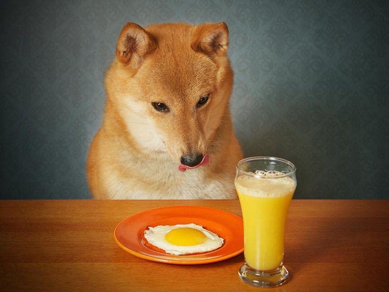 Có nên cho chó ăn trứng gà sống không? Cách cho chó ăn trứng gà sống