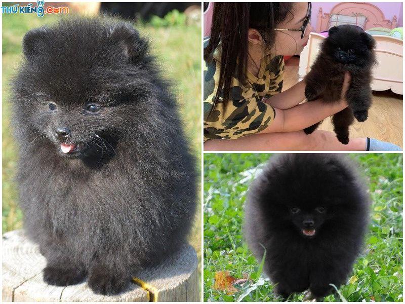 Mua bán chó mèo nhập khẩu từ Nga và Châu Âu