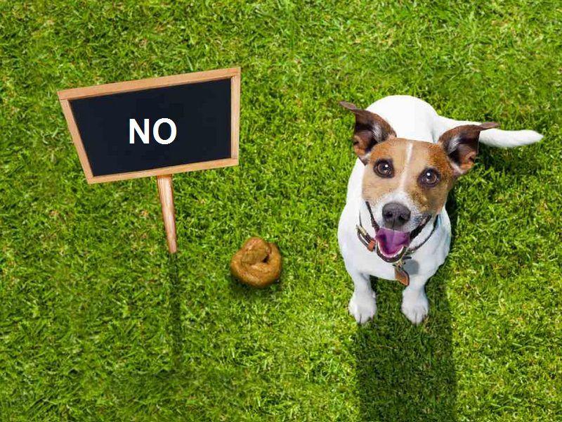 Tại sao chó lại ăn phân? Làm thế nào để chó hết ăn phân?