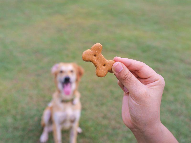 Giá bán bánh thưởng cho chó. Cách dùng bánh thưởng huấn luyện chó