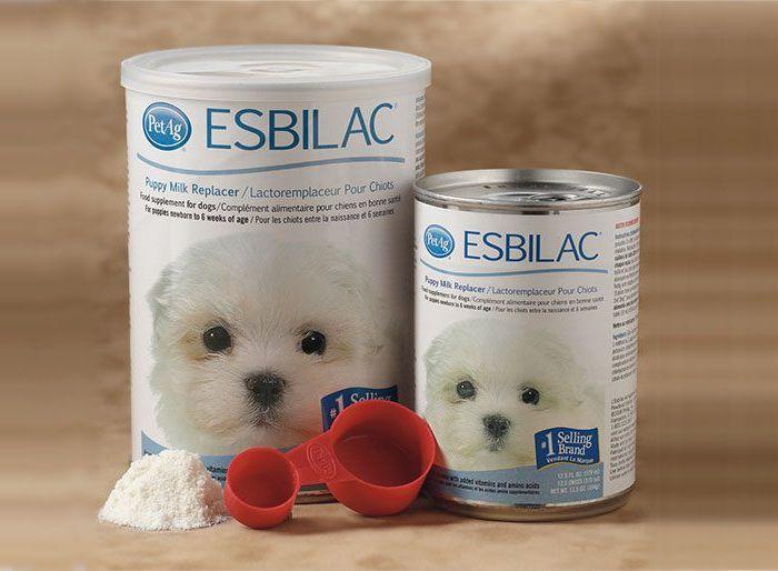 Chó con mới đẻ uống sữa gì? Giá bán, nơi bán sữa cho chó con mới đẻ