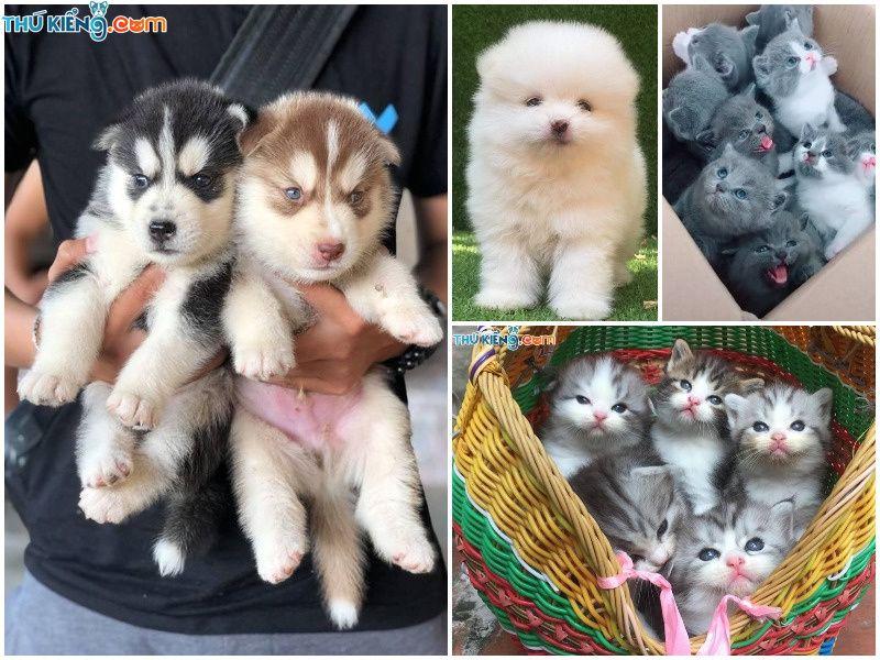 Nuôi Chó, Mèo Cảnh Làm Giàu. Tư Vấn, Hỗ Trợ Nhân Giống Chó Mèo