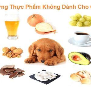 khong-nen-cho-cho-an-gi-1