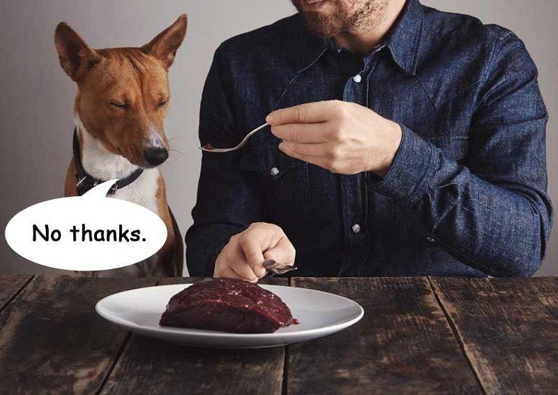 Không nên cho chó ăn gì? Những đồ ăn, đồ uống gây nguy hiểm cho chó