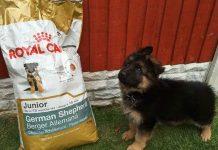 Giá bán thức ăn Royal Canin cho chó? Mua thức ăn Royal Canin ở đâu?