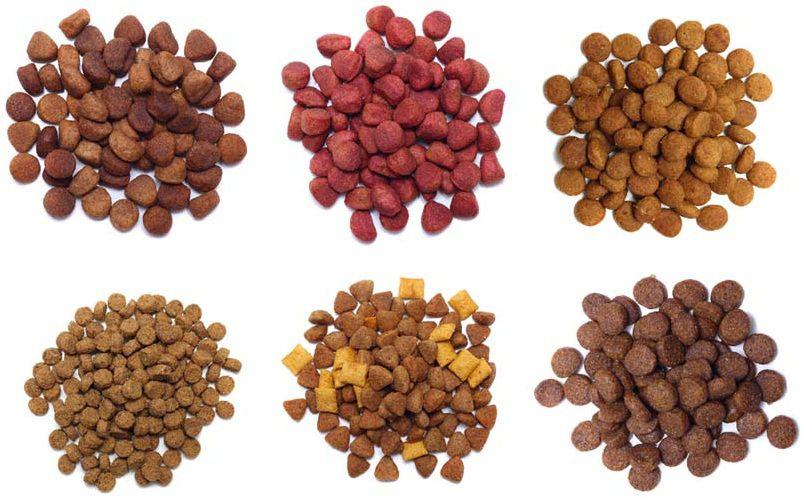 Thức ăn khô cho chó loại nào tốt? Có nên cho chó ăn thức ăn khô không?