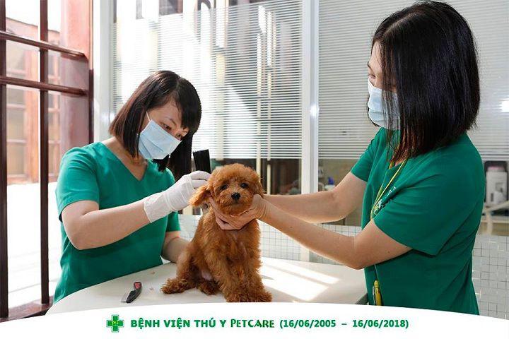 Các bệnh viện thú y, phòng khám thú y tốt nhất tại TP Hồ Chí Minh