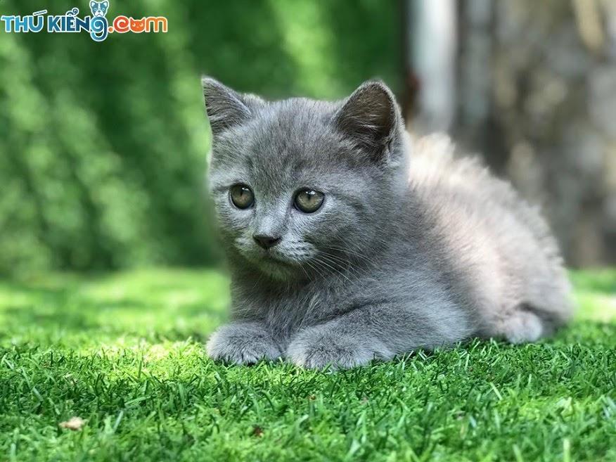 💖 Các cháu ALN_Mắm_Tôm rất là cute 😘