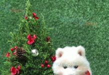 💝 Samoyed trắng tinh khôi như bông tuyết ❄️ Ai nhanh thì được rước em nha 😘😘