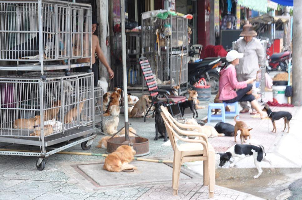 Một điểm bán chó mèo trên đường Lê Hông Phong – HCM