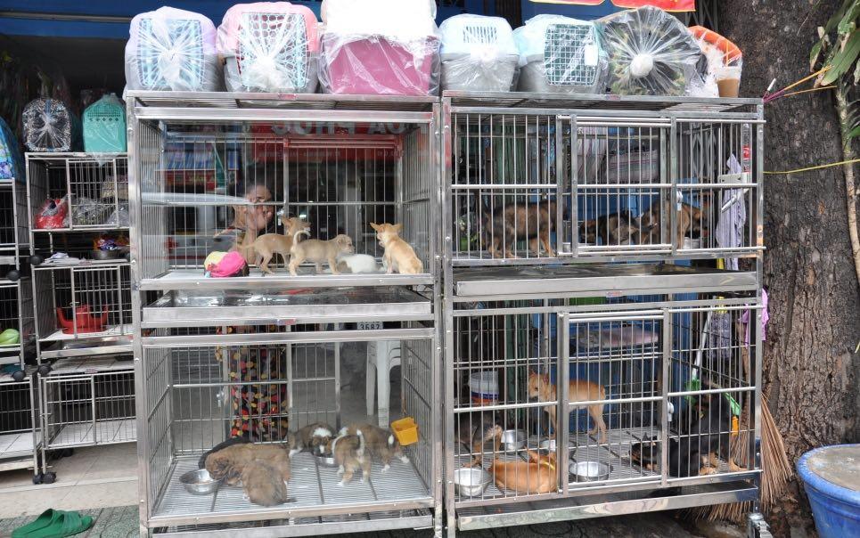 một quầy bán thú cưng trên đường Lê hông Phong – HCM