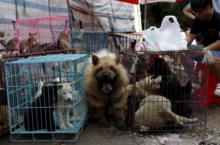 chợ bán chó cảnh tại Trung Quốc