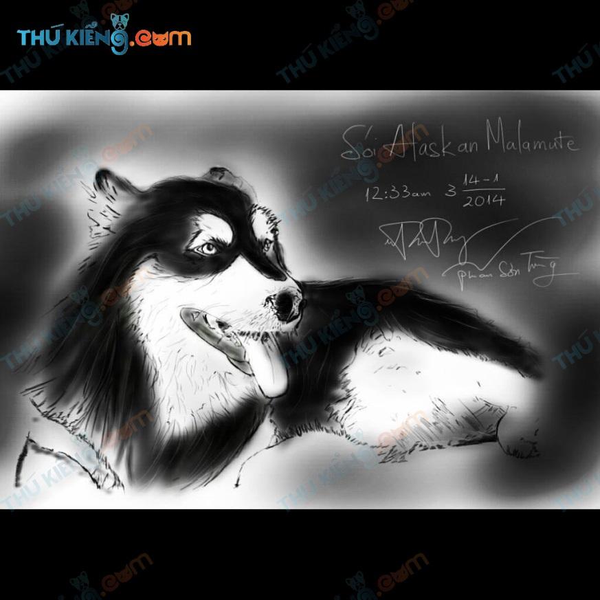 Một người bạn vẽ tranh tặng Alaskan Sói