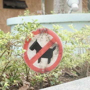 chó gây phiền nhiễu cho hàng xóm, vì vậy một số nơi cấm nuôi chó