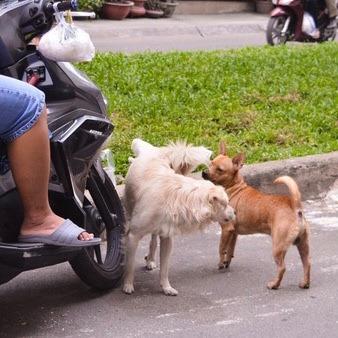 chó gây ra nhiều phiền phức và áp lực khiến bạn phải chia tay với chúng