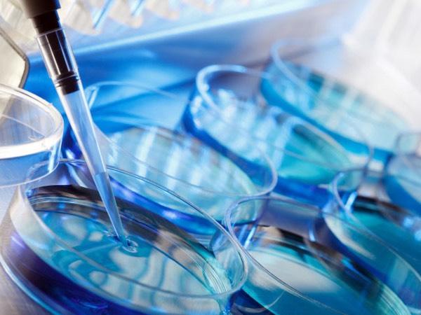 Phương pháp xác định gen thuần chủng bằng khoa học