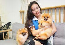Nhu cầu nuôi chó, mèo đang rất phát triển tại Việt Nam