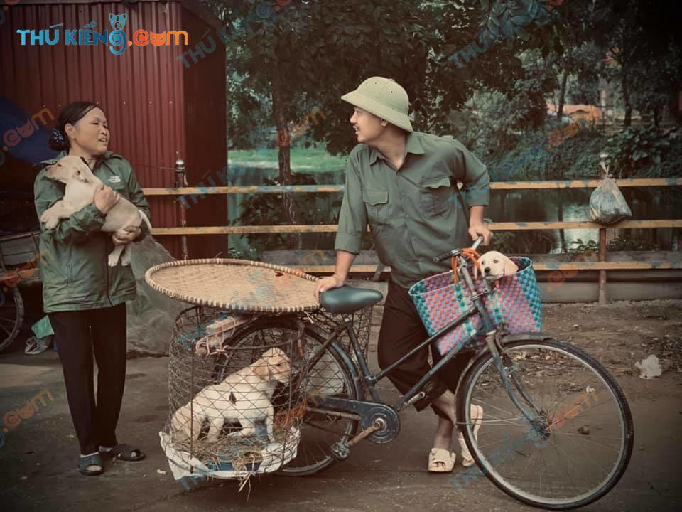 1985-1992 đánh dấu sự bùng nổ cũng như suy tàn của những người nuôi chó nhật - Ảnh minh họa