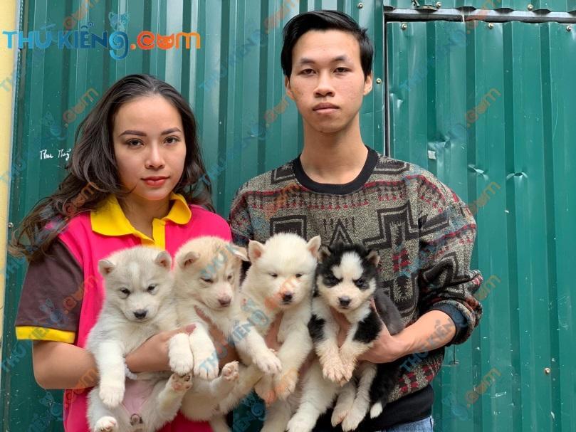 Bầy Husky nhà anh Thanh – HN