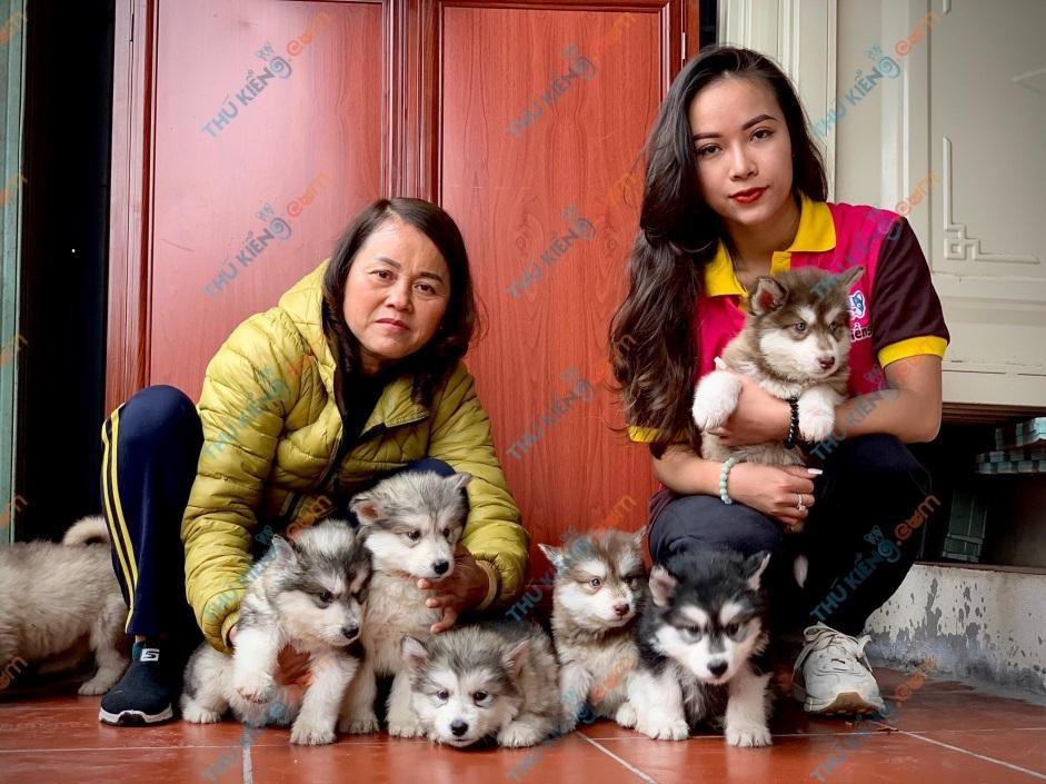 Bầy chó Alaskan alamute thuộc dự án ã hội hóa thú cưng nhà cô Ánh - Ba vì – Hà Nội
