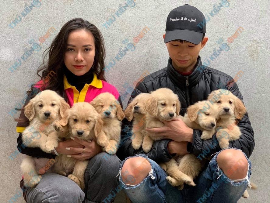 ầy chó Golden retriever hợp tác cùng dự án – A. … -HN