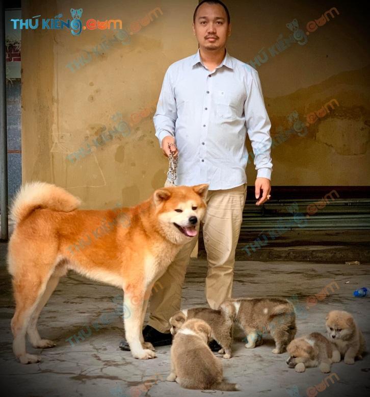 Đàn chó Akita Inu được sinh sản tại VN liên kết bởi Dự án xã hội hóa thú cưng – Chú Việt- Hải Dương