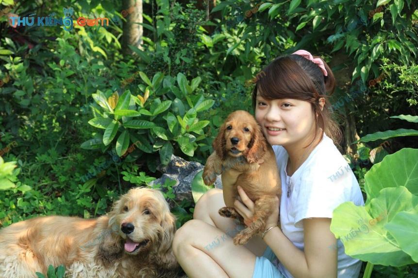 Chị Hương và những bé Cún Cocker spaniel- Chó Tây Ban Nha tham gia dự án Xã Hội hóa thú cưng
