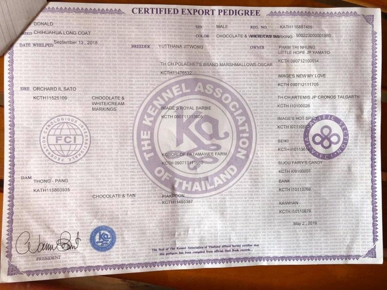 Giấy chúng nhận thuần chủng từ hiệp hội chó giống AK – Thái lan, thành viên FCI