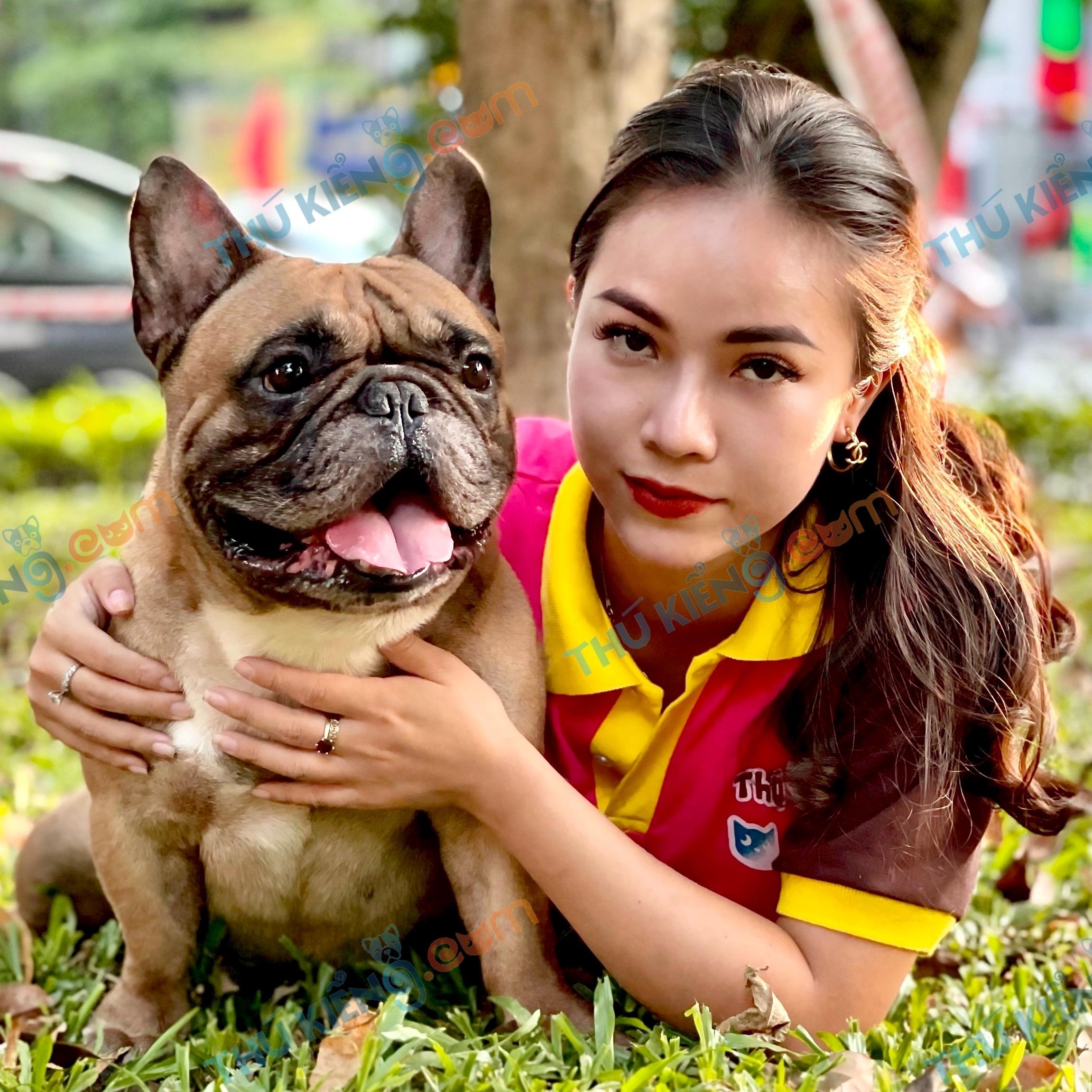 french bulldog ( Bun Pháp)