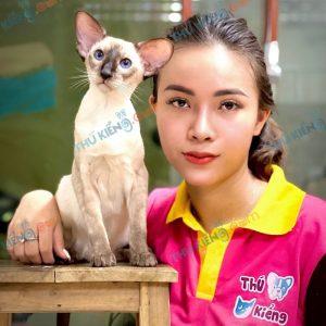 mèo orienta