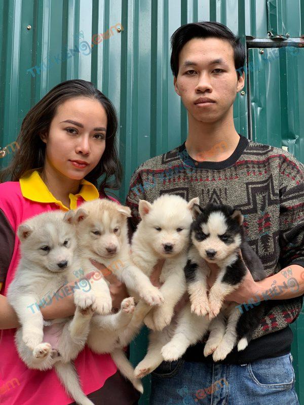 giong-cho-siberian-husky-30-ngay-tuoi-xuat-chuong-thang-1-2021-10