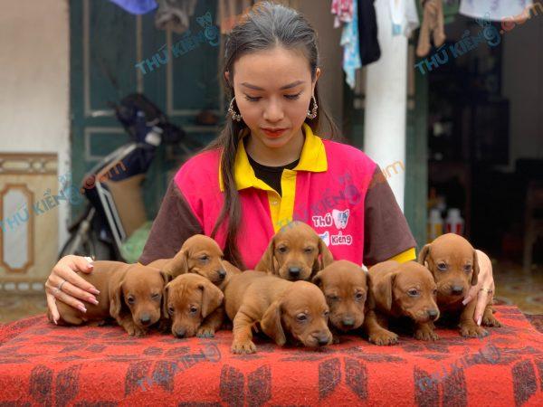 giong-cho-dachshund-45-ngay-tuoi-xuat-chuong-thang-4-2021-1