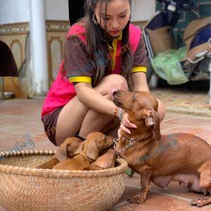 giong-cho-dachshund-45-ngay-tuoi-xuat-chuong-thang-4-2021-8