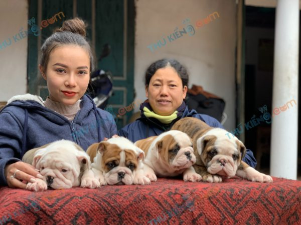 giong-cho-english-bulldog-45-ngay-tuoi-xuat-chuong-thang-3-2021-5